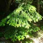 branches au printemps