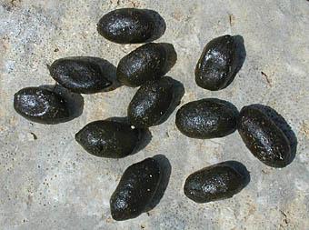 crottes d'isard