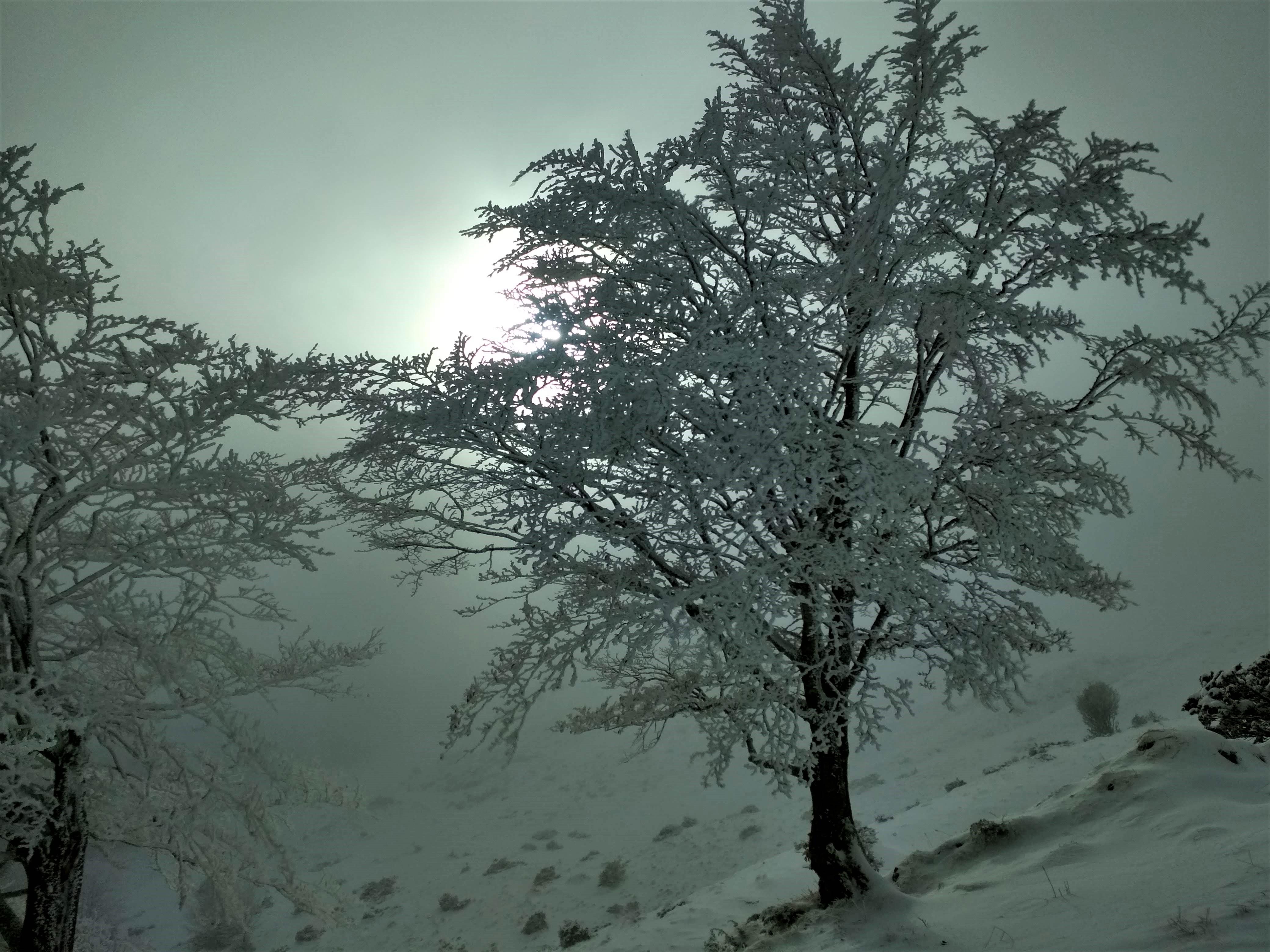 Neige dans les Pyrénées