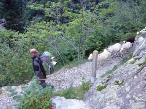 Descente des troupeaux dans les Gorges de Clarabide